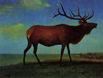 0 Elk 	 Art Reproductions