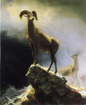 0 Rocky Mountain Sheep	 Art Reproductions