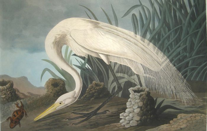 White Heron  Painting Reproductions