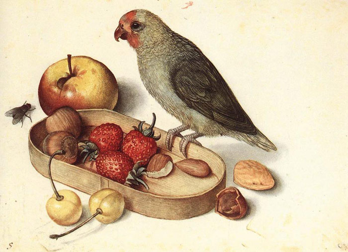 Still Life with Pygmy Parrot, Undated  Painting Reproductions