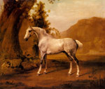 Stubbs  George A Grey Stallion In a Landscape, c.1765 Art Reproductions