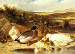 Herring Snr, John Frederick Mallard Ducks and Ducklings on a River Bank, 1863 Art Reproductions