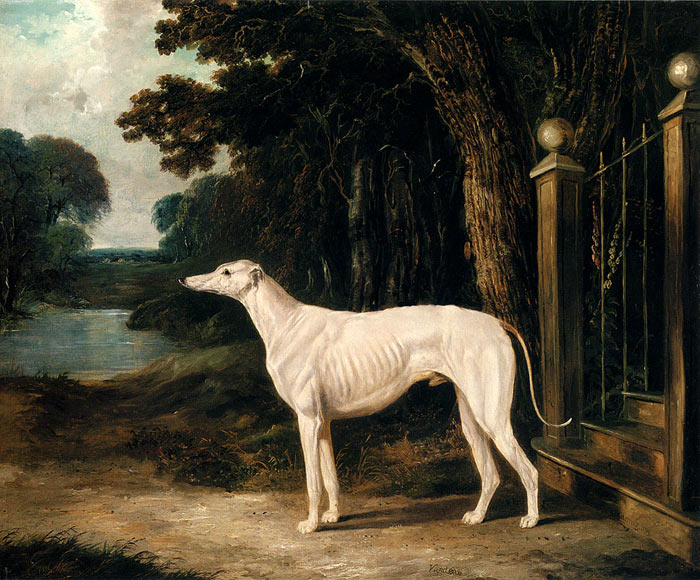 Vandeau, A White Greyhound, 1839  Painting Reproductions