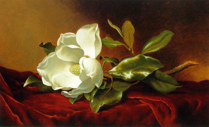 Heade Oil Painting- Single Magnolia On Red Velvet