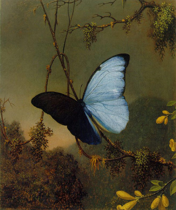 Blue Morpho Butterfly, c.1864-1865 Heade, Martin Johnson Painting Reproductions