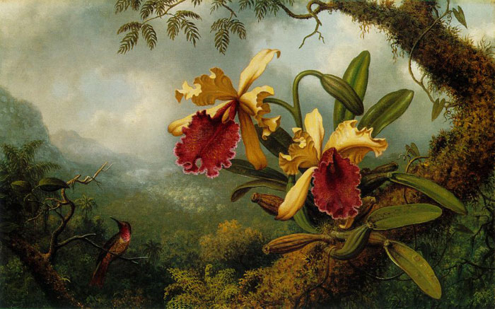Orchids and Hummingbird, c.1875-1883  Painting Reproductions