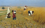 Harvest in Ukraine Art Reproductions