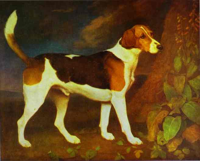 A Foxhound, Ringwod, 1972  Painting Reproductions