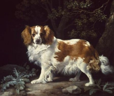 King Charles Spaniel, 1776  Painting Reproductions
