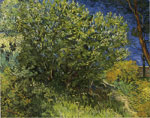Vincent van Gogh Lilac Bush, 1889 Art Reproductions